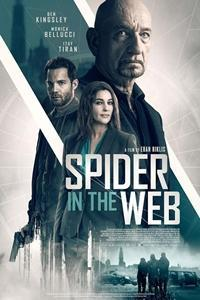 spider_in_the_web-365463767-large